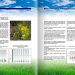 Environmental Report - detail 6