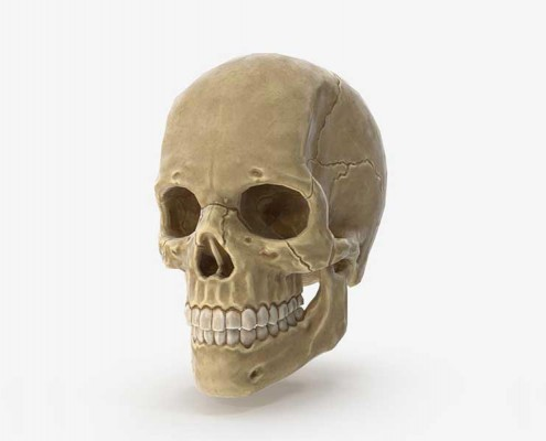 Human Skull Game Ready